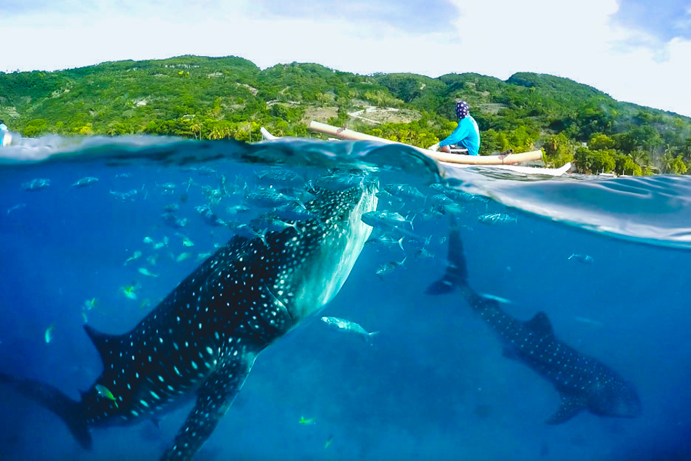 Cebu Oslob Whale Sharks and Waterfalls Day Tour with Lunch & Transfers from Cebu City - day 1