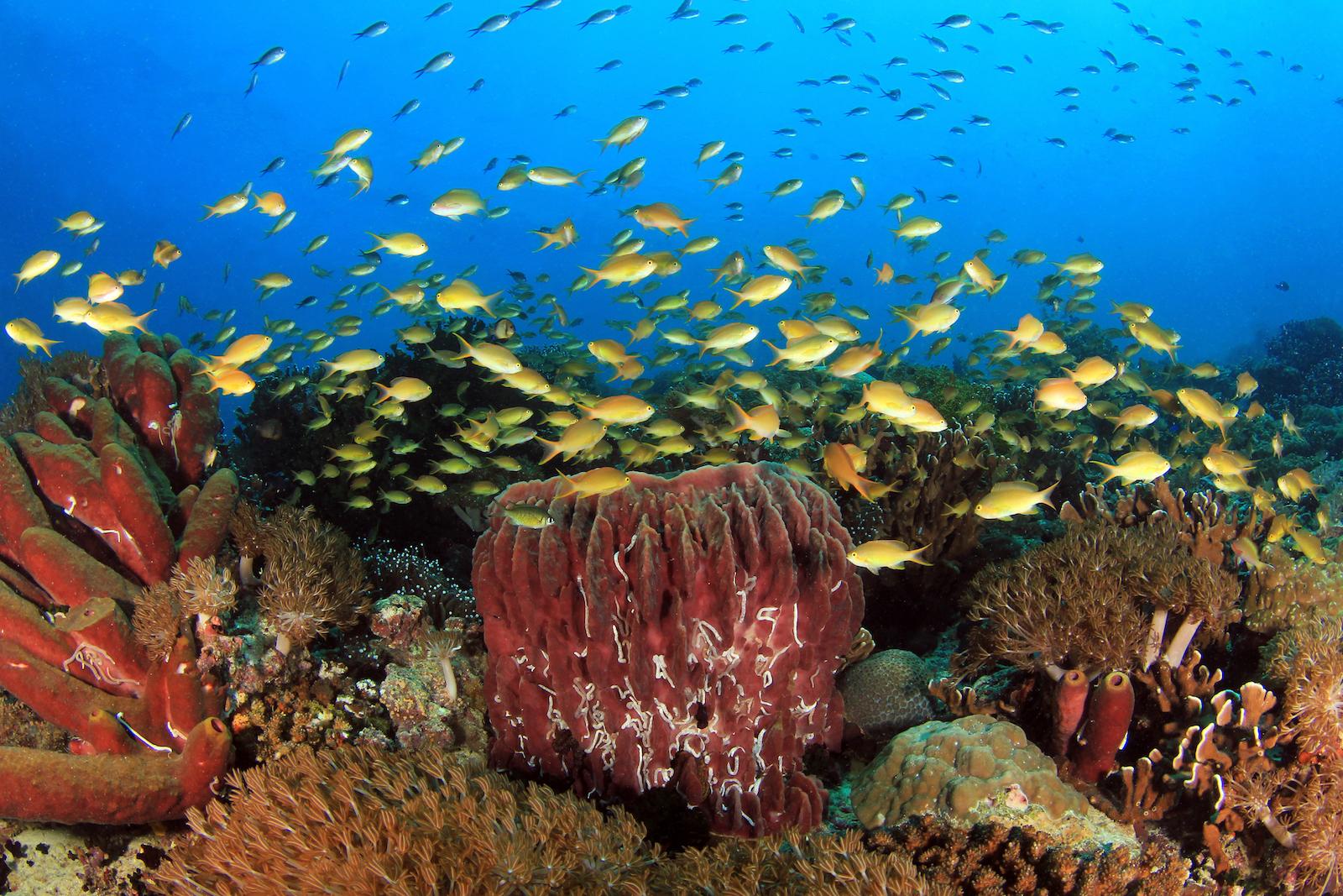 Moalboal Sardine Run & Pescador Island Turtles | Cebu Day Tour