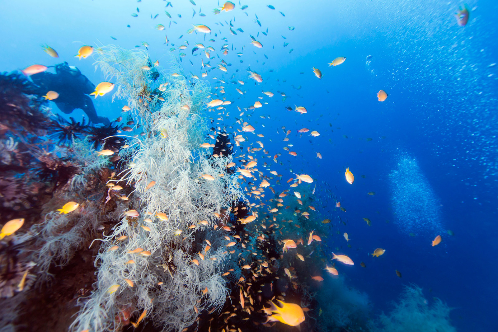 Hilutungan Marine Sanctuary & Pandanon Island Cebu Day Tour