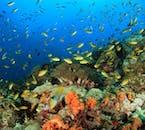 Coral Reef in Pescador Island