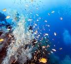 Nalusuan Island Coral Reef