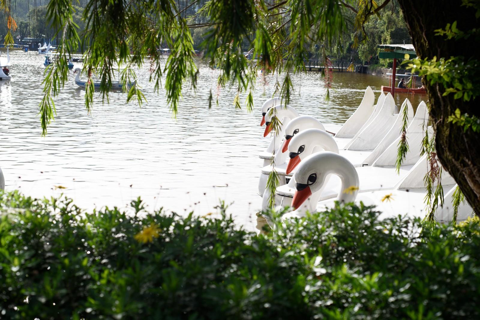 Colorful swans at Burnham