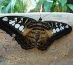 butterfly in baluarte zoo
