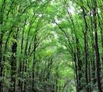Abatan River in Bohol | Firefly Watching Tour