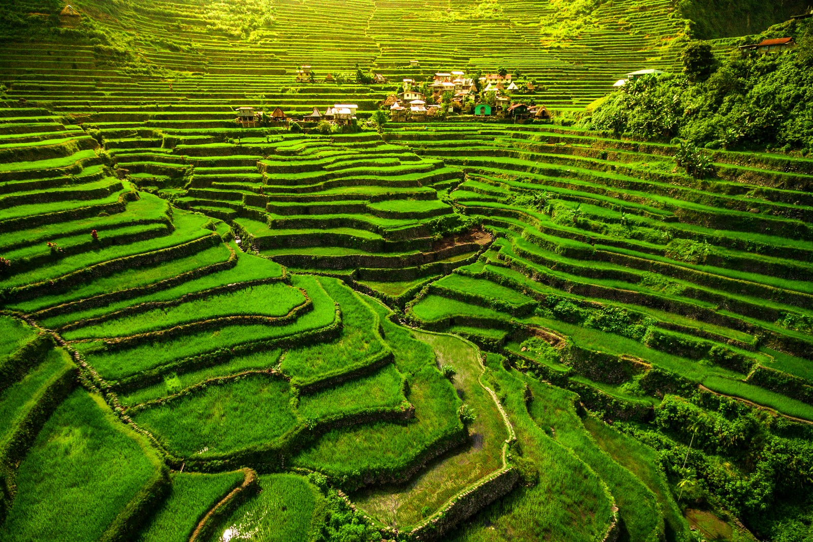 Banaue Full-Day Heritage Tour | With Lunch & Transfers from Baguio City