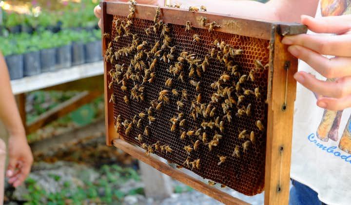 Bees nesting at The Bohol Bee Farm