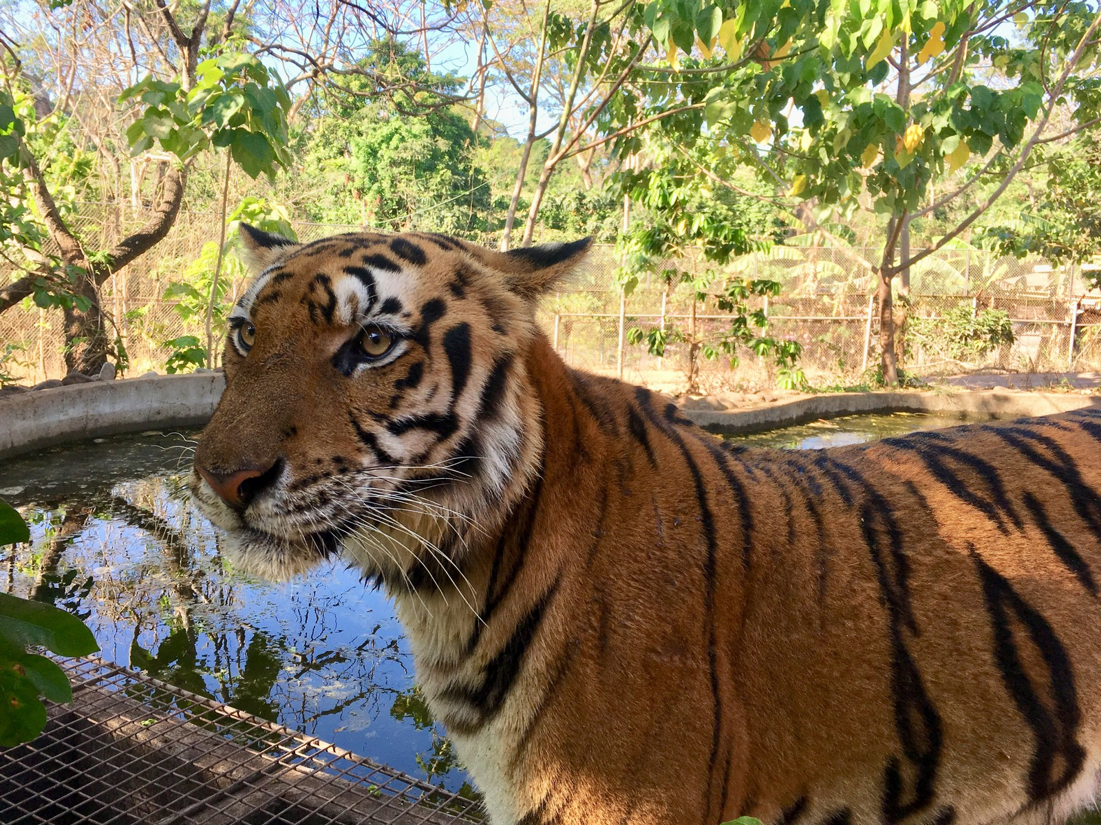 Zoobic Safari & Bat Kingdom Day Tour with Buffet Lunch