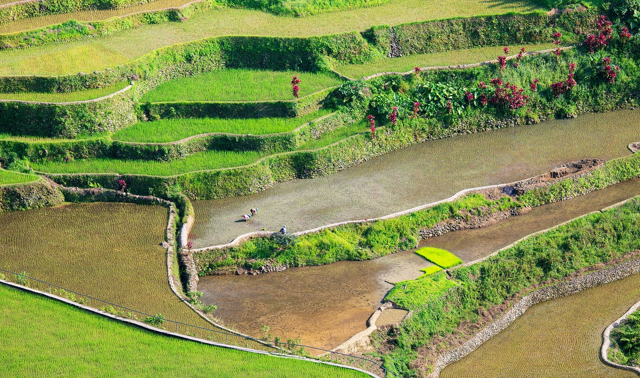 Bask in Banaue Rice Terraces' beauty