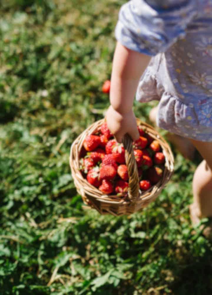 Strawberry Farm Tours