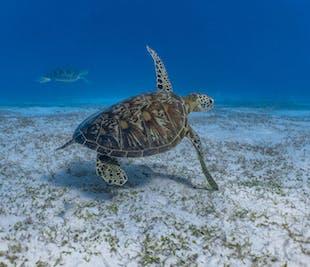 Balicasag Island Tour | Snorkeling Adventure