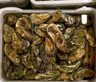 Cambuhat Oyster Village Tour in Bohol | Seafood Buffet Included