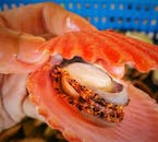 Islas de Gigantes Island Hopping Shared Tour in Iloilo with Fresh Seafood Lunch
