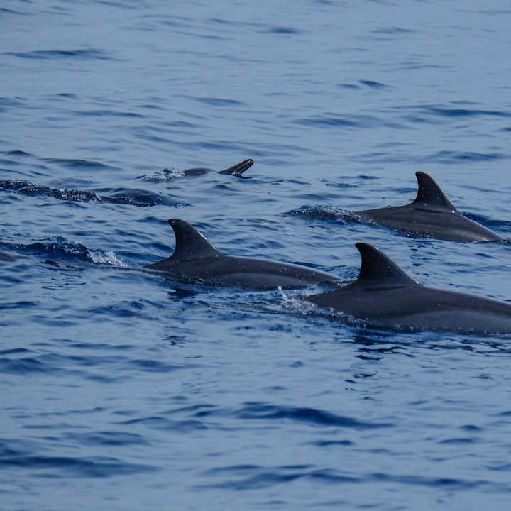 Manjuyod Sandbar & Dolphin Watching Private Tour from Dumaguete