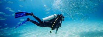 Dive & explore marine life