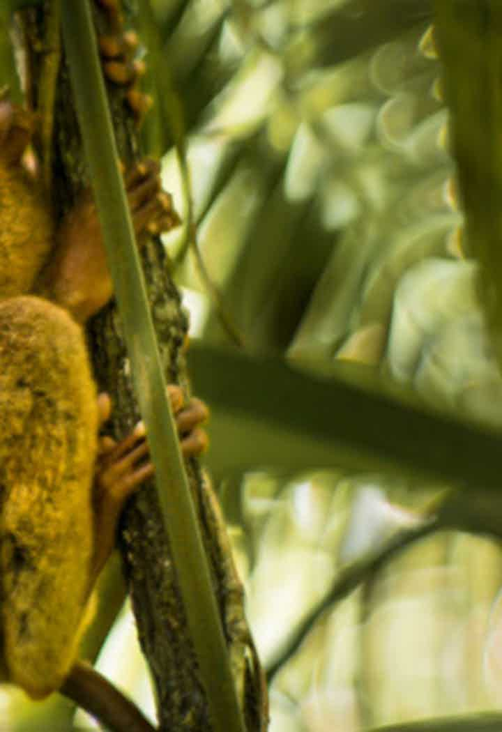 Tarsier Conservation Tours