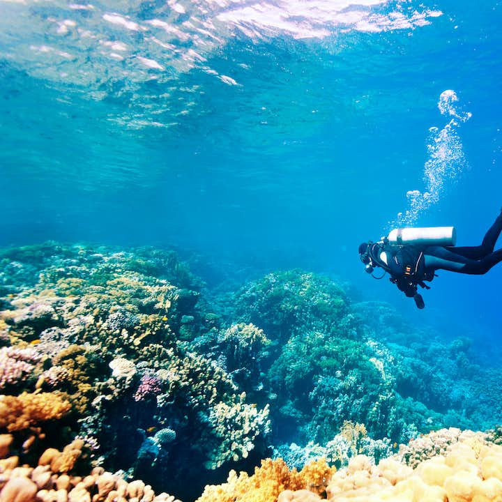 Scuba Dive Davao Weekend Adventure | With Land & Boat Transfers