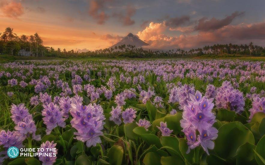 Mayon Volcano in Legazpi, Albay