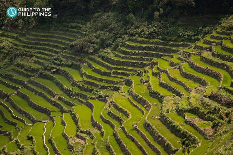Rice Terraces in Cordillera Region, Philippines