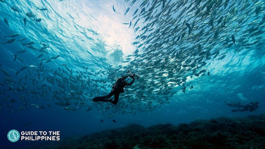 Tubbataha Reef in Palawan
