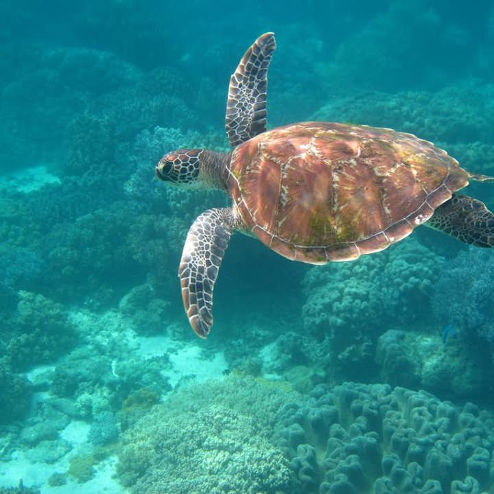 Apo Island Day Tour with Snorkeling | Pick-up from Dumaguete