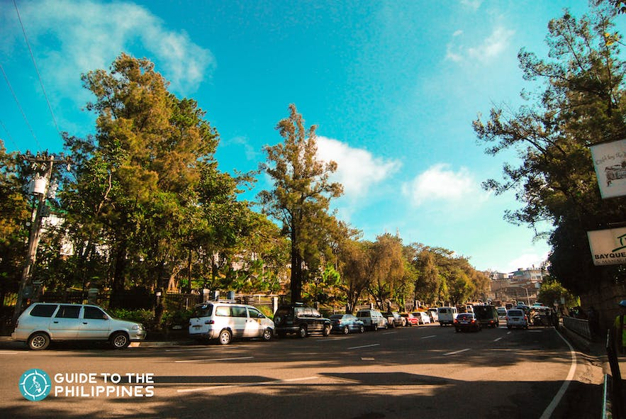 pine trees and greeneries in baguio