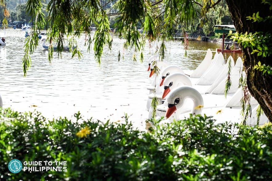 swan boats in burnham park