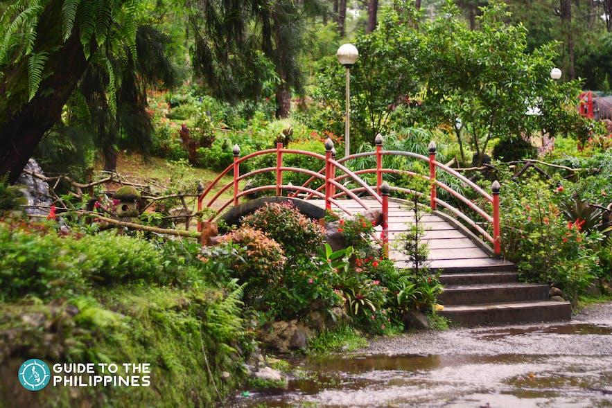 bridge inside the baguio botanical garden