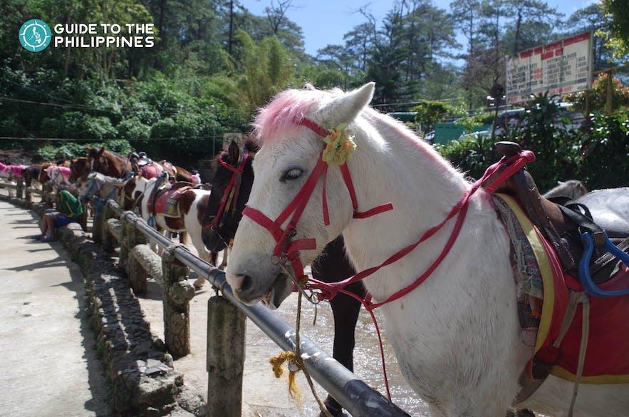 horses in wright park