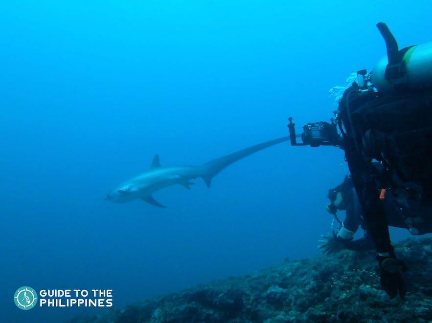 Spotting of Thresher sharks in Malapascua, Cebu