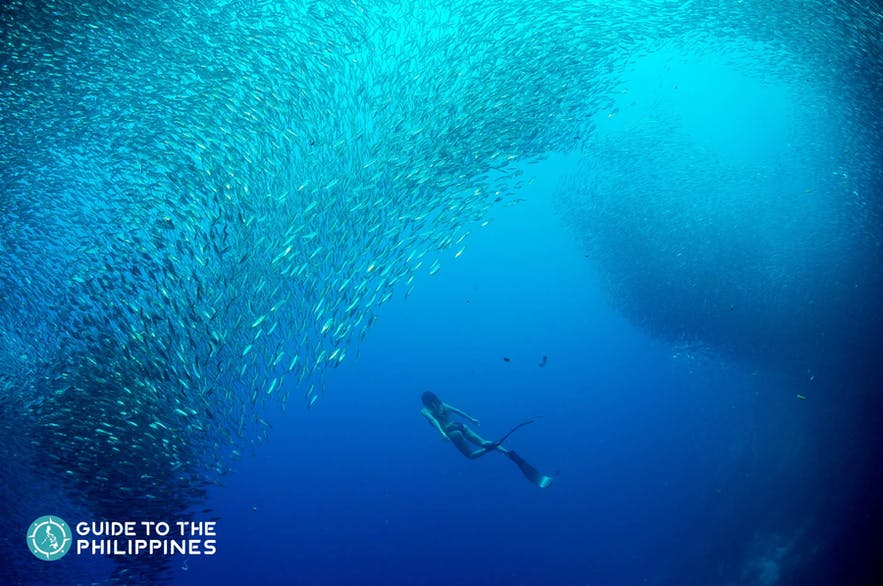 Girl diving in Moalboal Sardine run