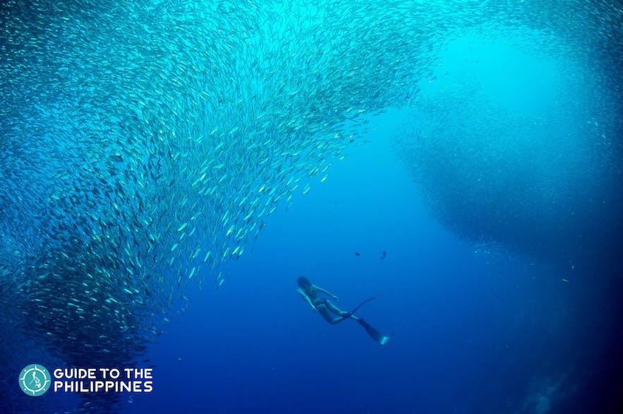 Woman freediver in a sardine run in Moalboal