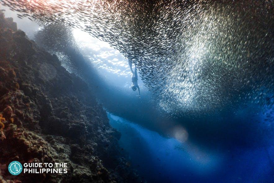 Diver in Moalboal, Cebu