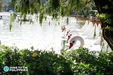 mines view swan.jpg