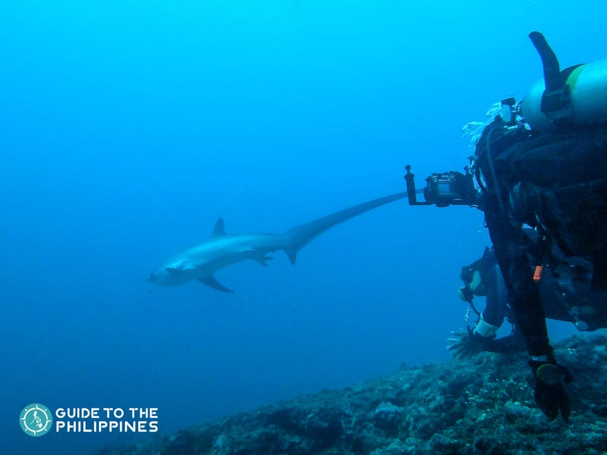 Diver in Malapascua Island in Cebu spotting a thresher shark