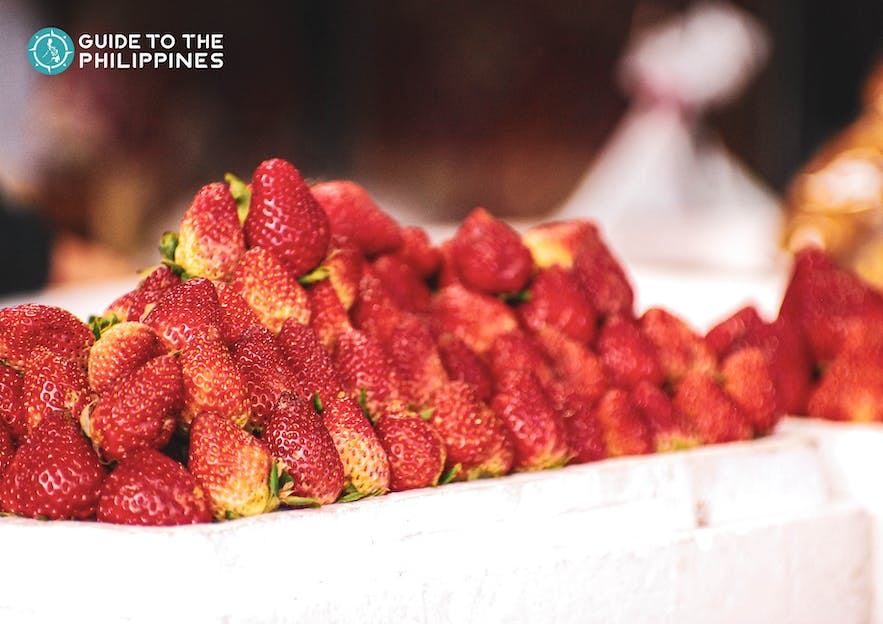 Take home fresh strawberries from Baguio City