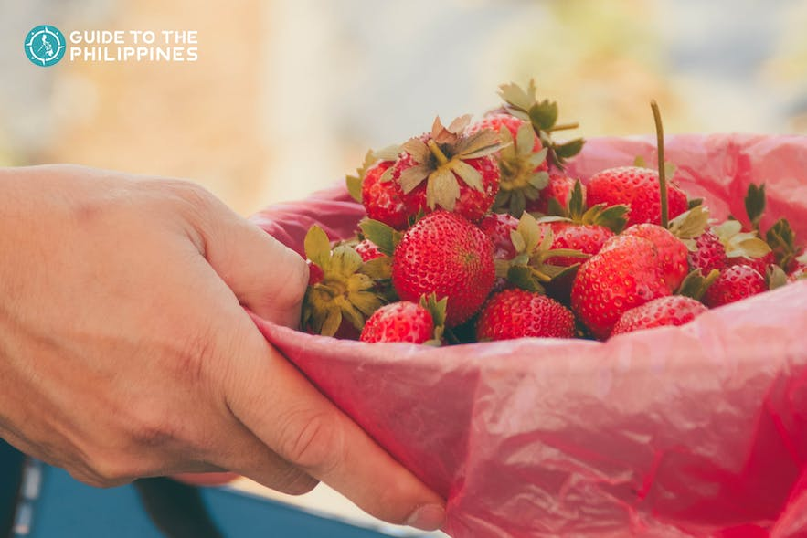 A bowl of fresh strawberries from Baguio City, Philippines