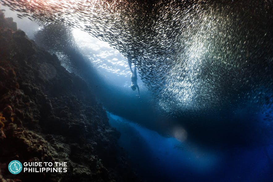 Witness the world-famous sardine run in Moalboal, Cebu