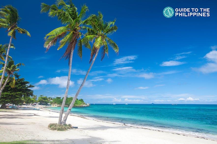 Coconut trees at the Langub Beach in Malapascua Island of Cebu