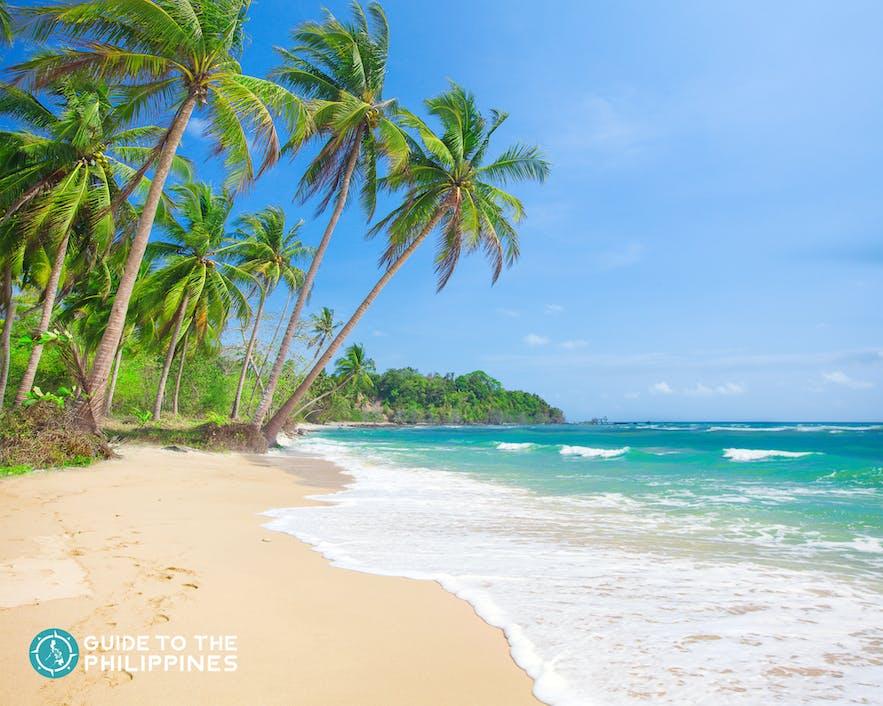 White sand beach in Malapascua, Cebu