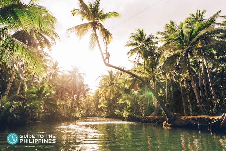 Siargao's Bent Coconut Tree Rope in Maasin River