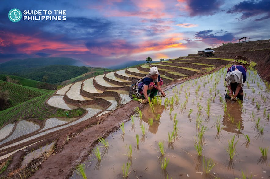Farmers at Banaue Rice Terraces in the Philippines