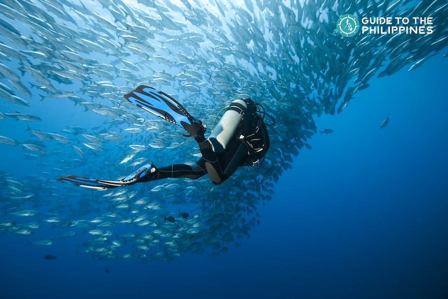 Diver in Panglao, Bohol