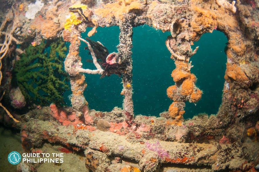 World War II shipwreck diving in Coron, Palawan