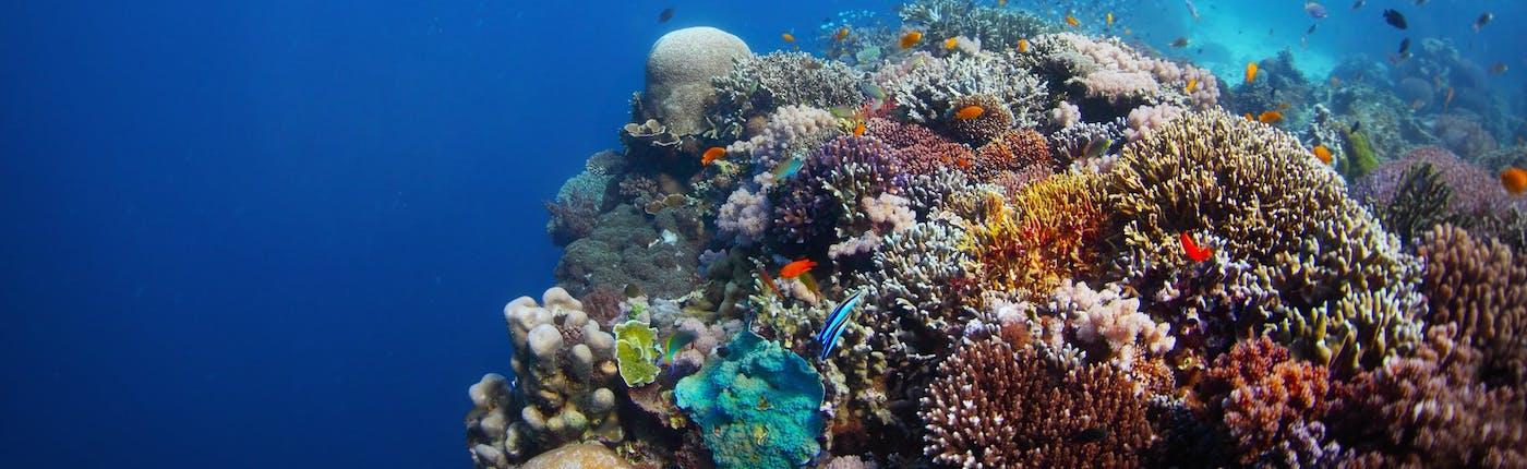 Coral reef in Balicasag Island of Bohol