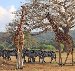 Calauit Safari Coron Full-Day Tour | With Picnic Lunch