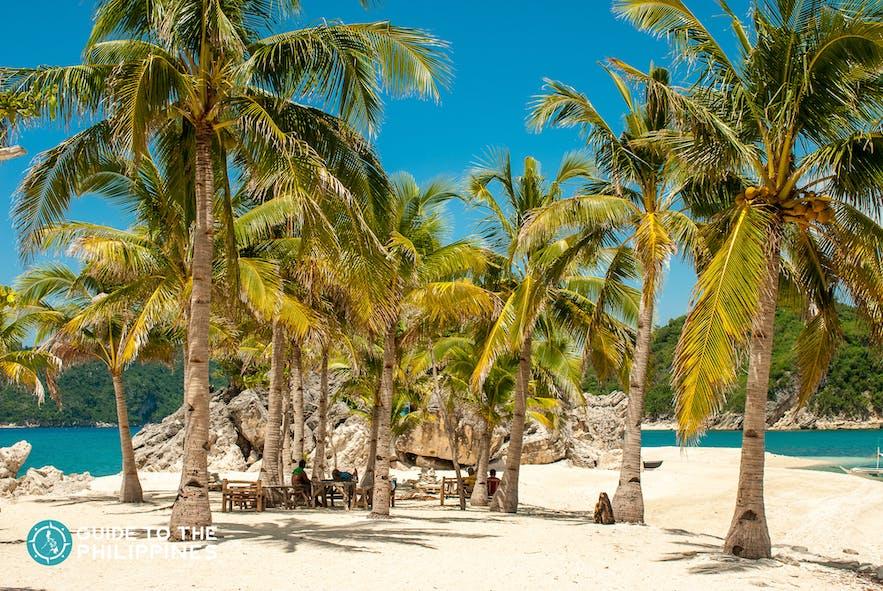 Coconut trees during summer in Islas de Gigantes
