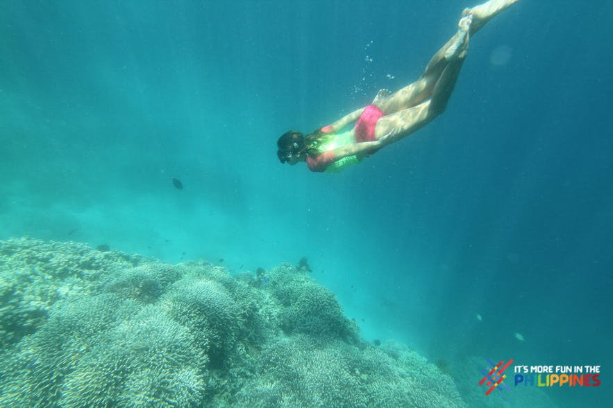 Diving in Mantigue, Camiguin
