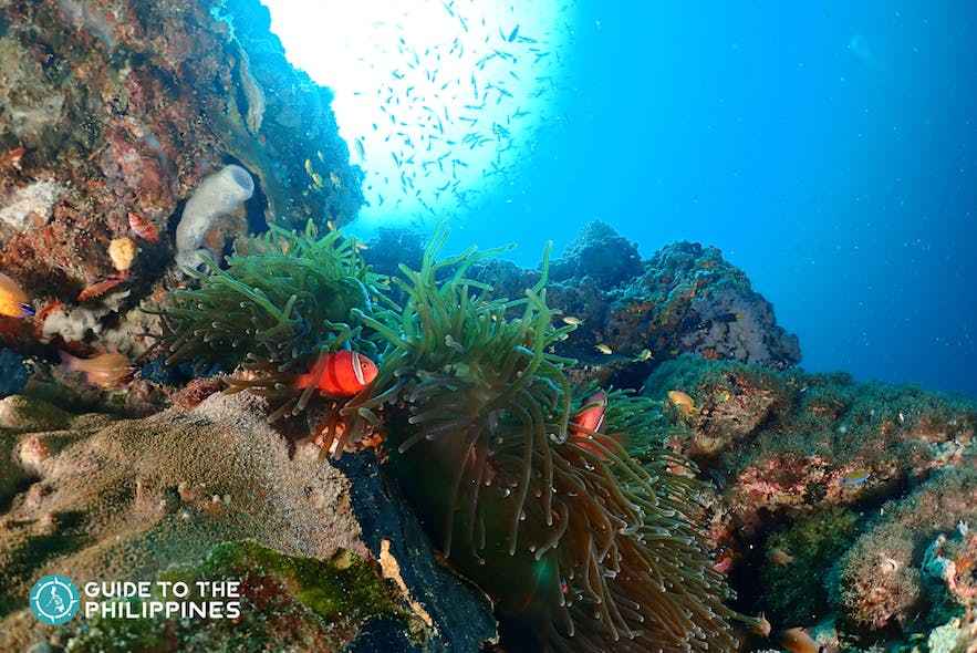 Coral reefs in Olango Island