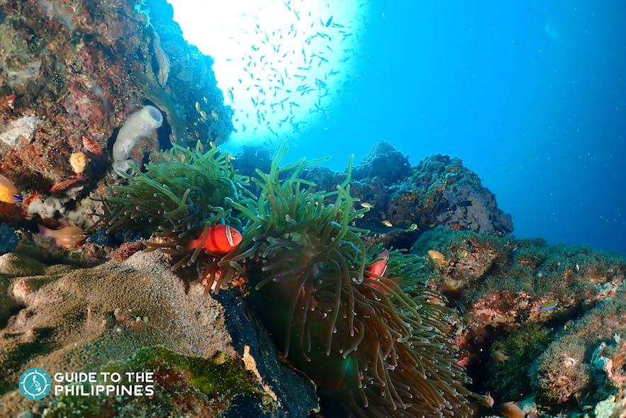 Coral reefs in Olango Island
