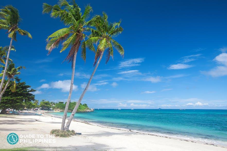 Beach and Coconut Trees in Langob beach, Malapascua island, Cebu
